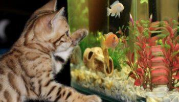 Каких домашних животных лучше всего выбирать для своих детей?